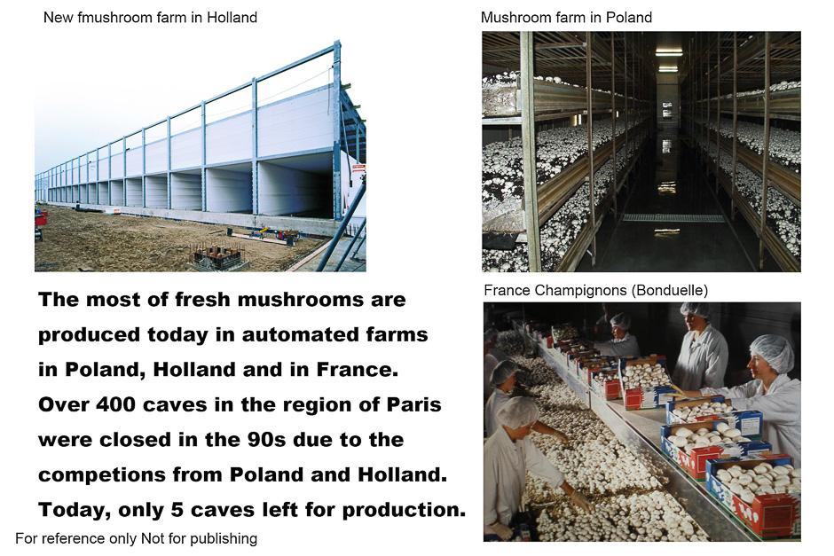 6-MushroomFactory