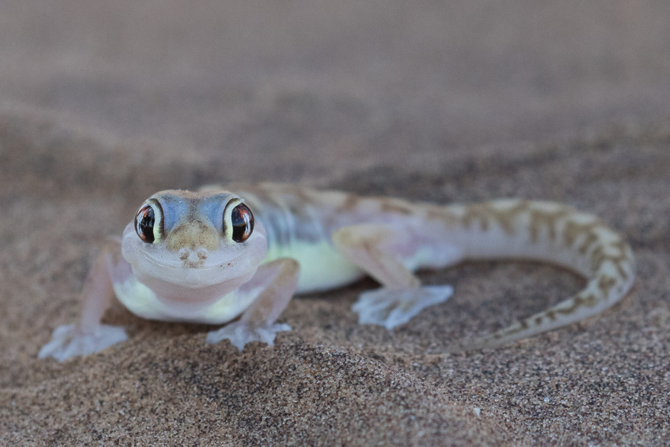Namib2015-07