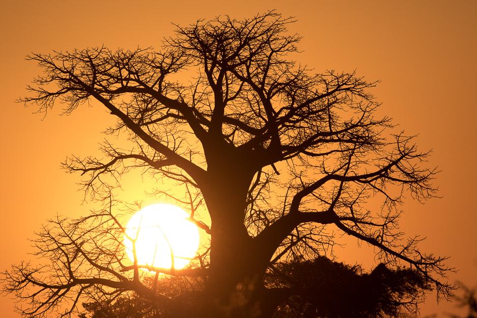Okavango2015-21