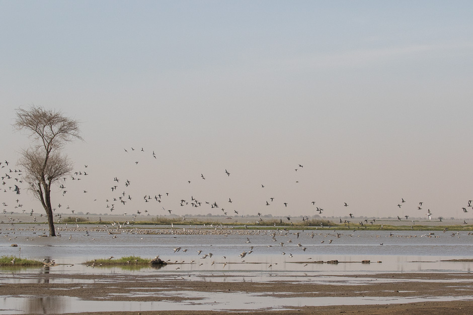 Nile-birds01