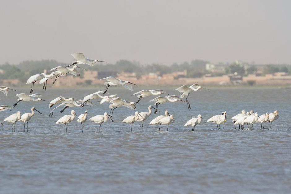 Nile-birds02