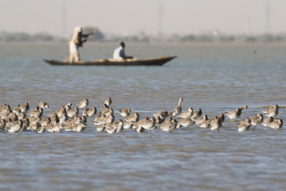 Nile-birds03