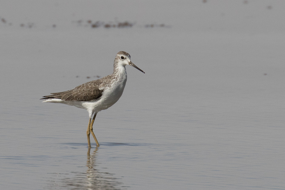 Nile-birds04