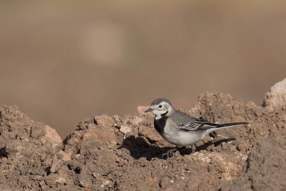 Nile-birds06