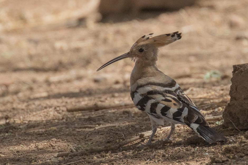 Nile-birds08