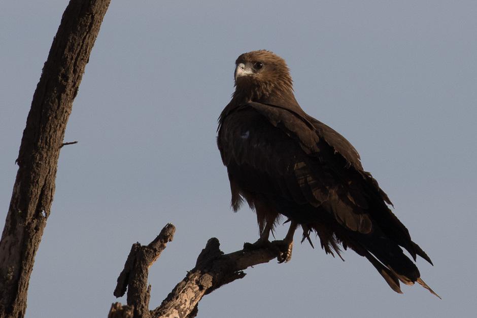 Nile-birds09