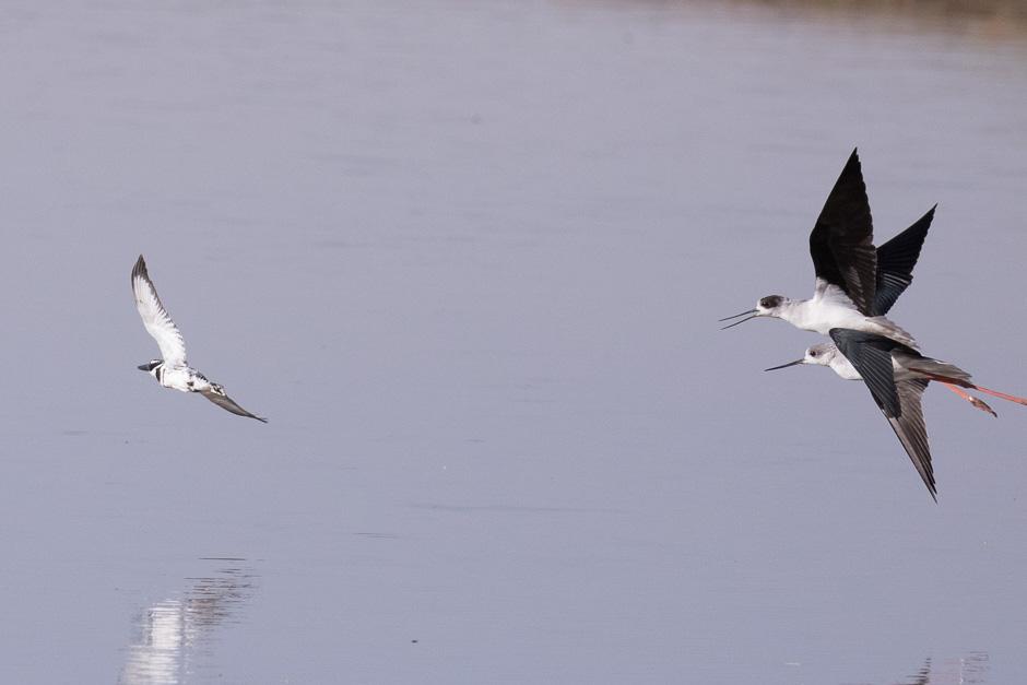 Nile-birds10