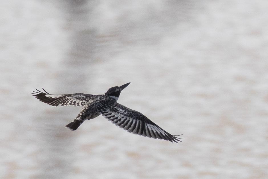 Nile-birds11