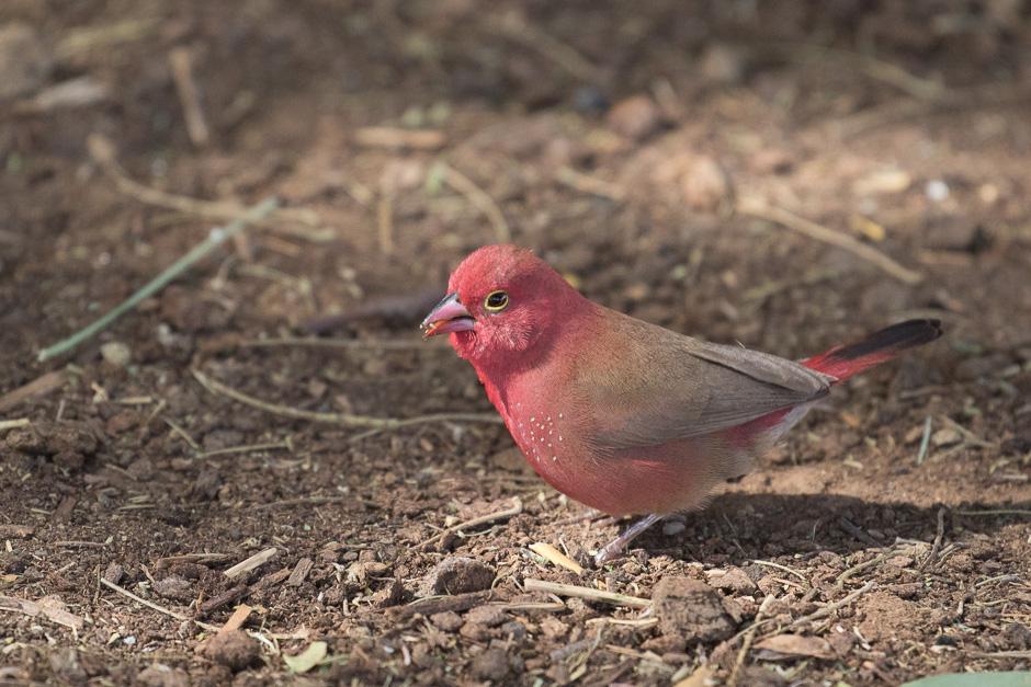 Nile-birds12