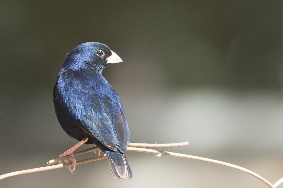 Nile-birds13