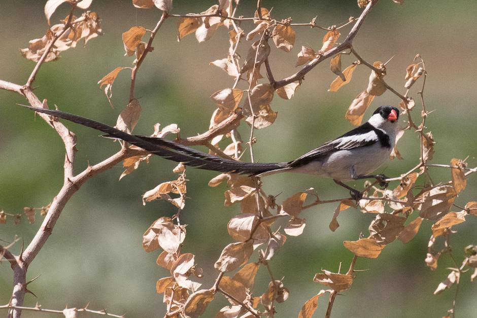 Nile-birds14