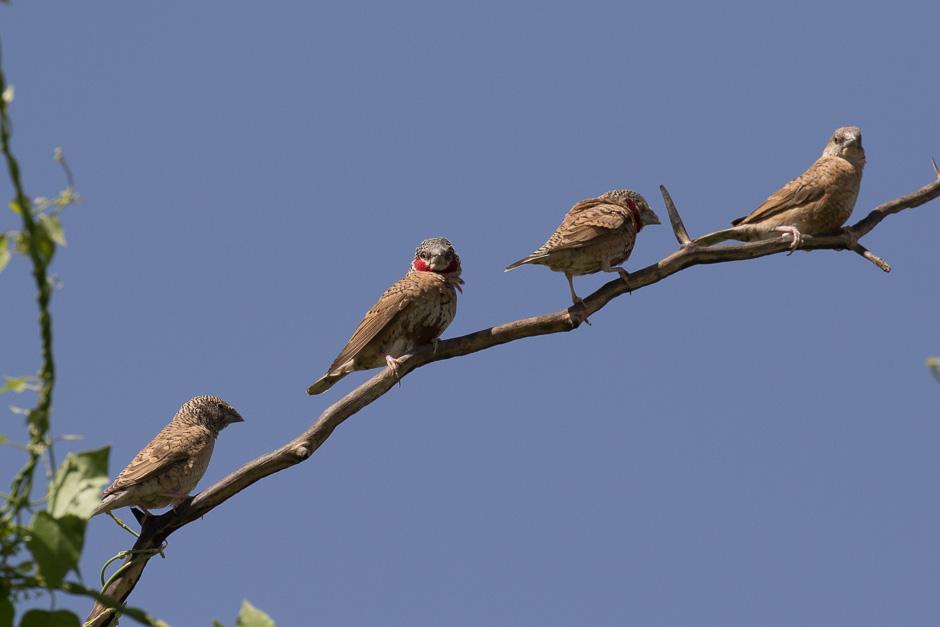 Nile-birds15