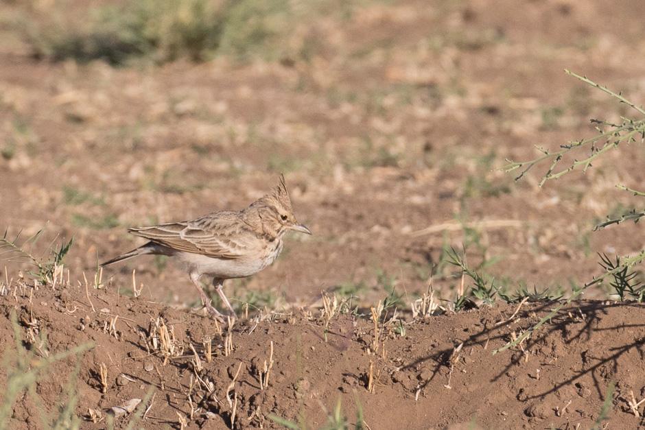 Nile-birds17