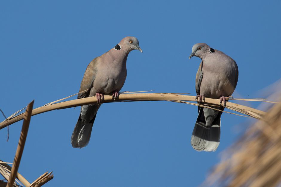 Nile-birds18