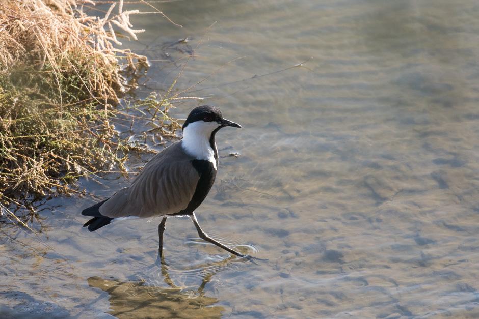 Nile-birds19
