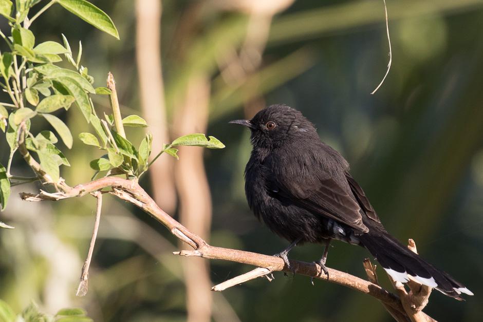 Nile-birds20