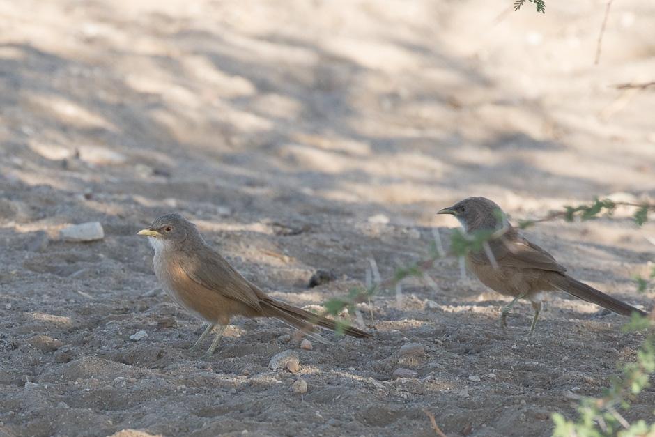 Nile-birds21