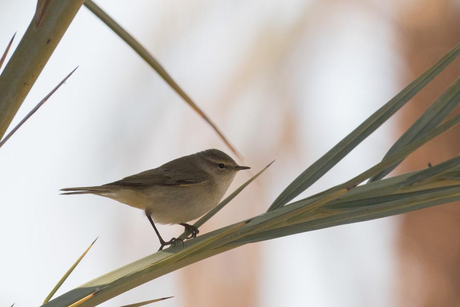 Nile-birds22