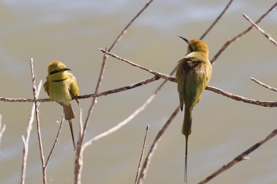 Nile-birds23