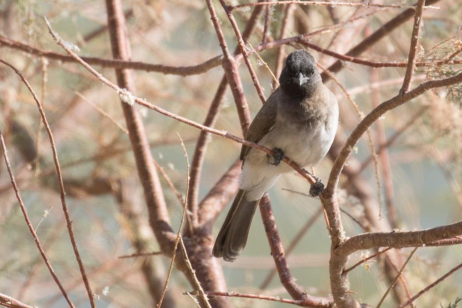Nile-birds24