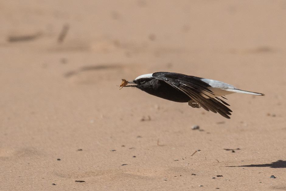 Nile-birds25